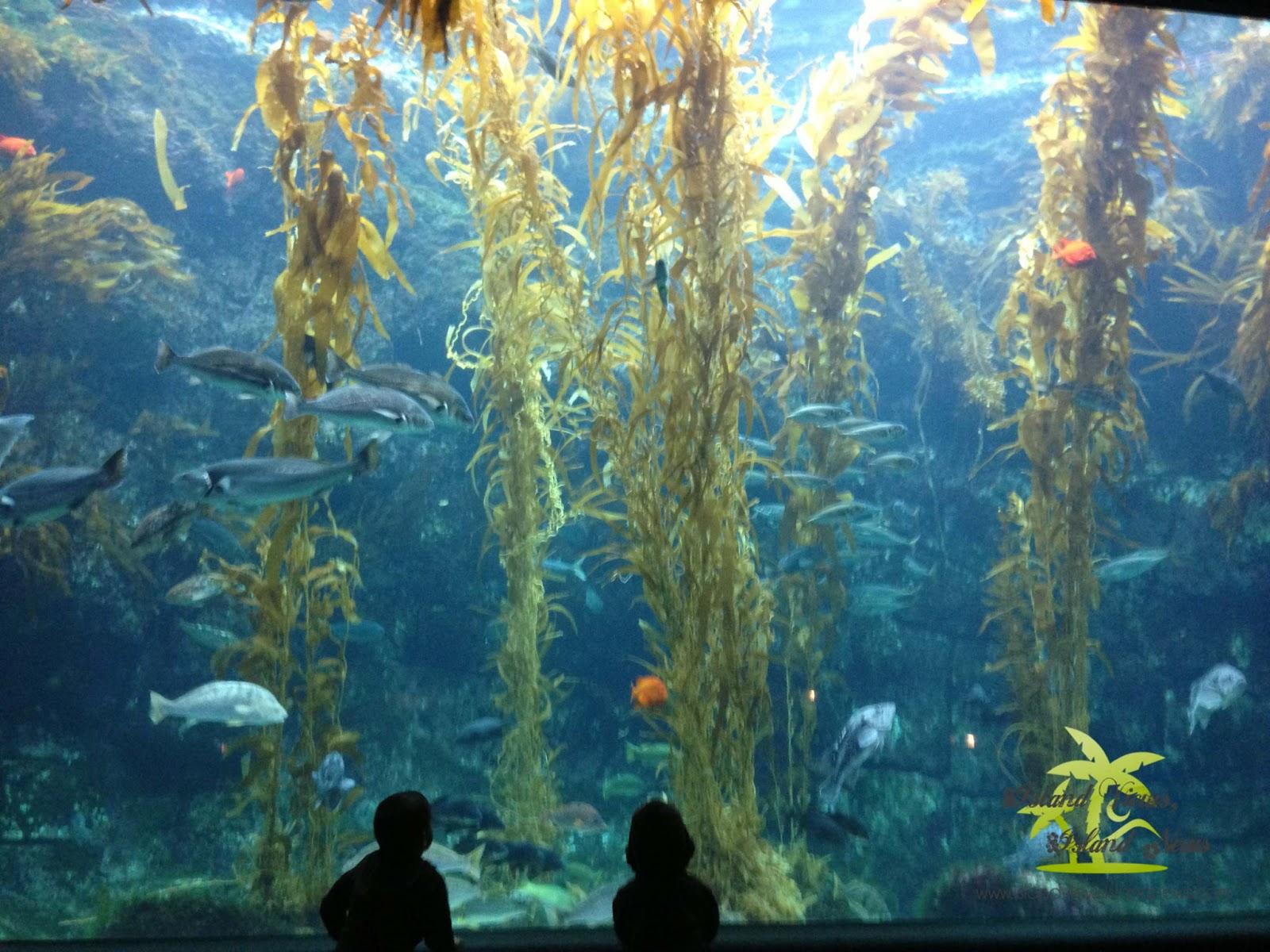 Hawaii Mom Blog Off Island Birch Aquarium At Scripps