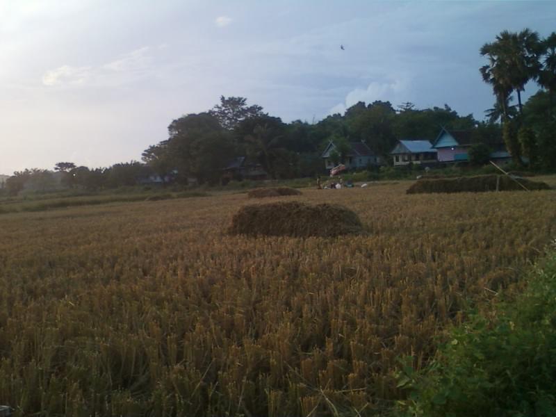 Bagaimana Keadaan Pertanian Indonesia Sekarang Opini Krisis