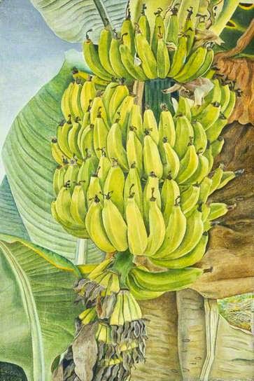 Lucian Freud - bananas1952.