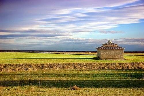 tierra de campos palomar