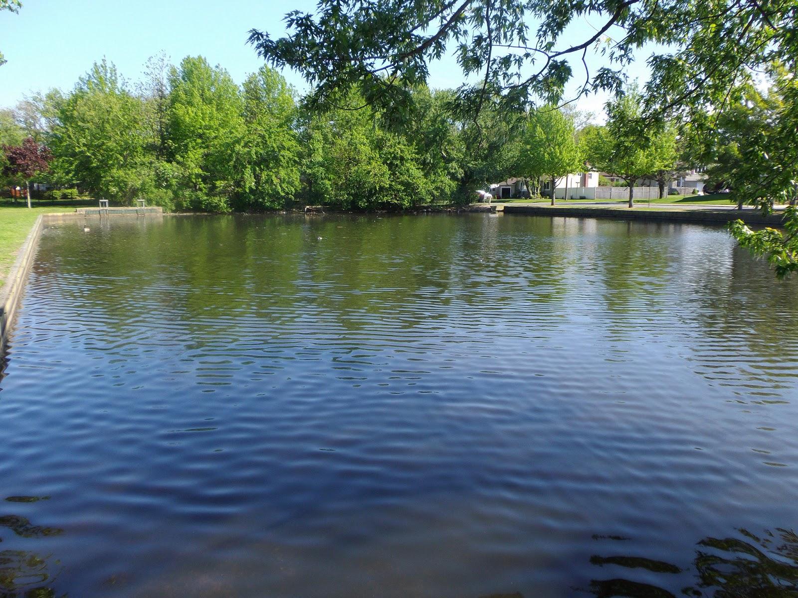 Long island carp the great lakes of nyc for Koi pond york