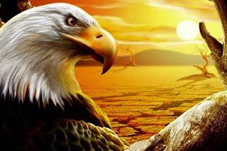 http://3.bp.blogspot.com/-SZ9Fh5QBeog/VVJ4Qk1DqsI/AAAAAAAABSY/vGc93l3jJZU/s640/1016740__sunset-eagle_p.jpg