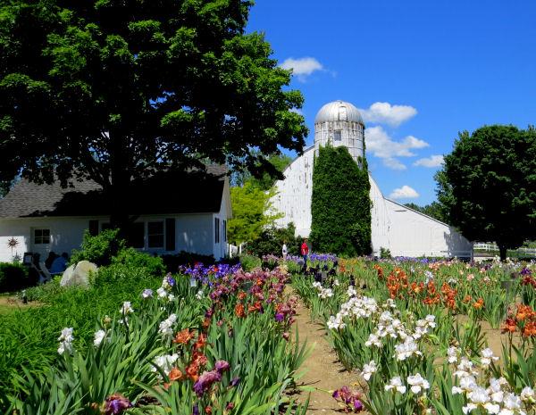 Leelanau Iris Farm