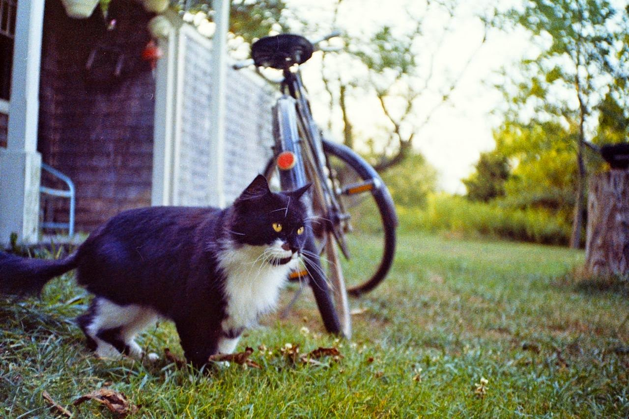 cat near bicycle