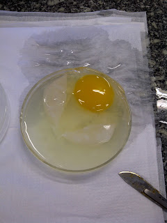 Egg with Salt Water
