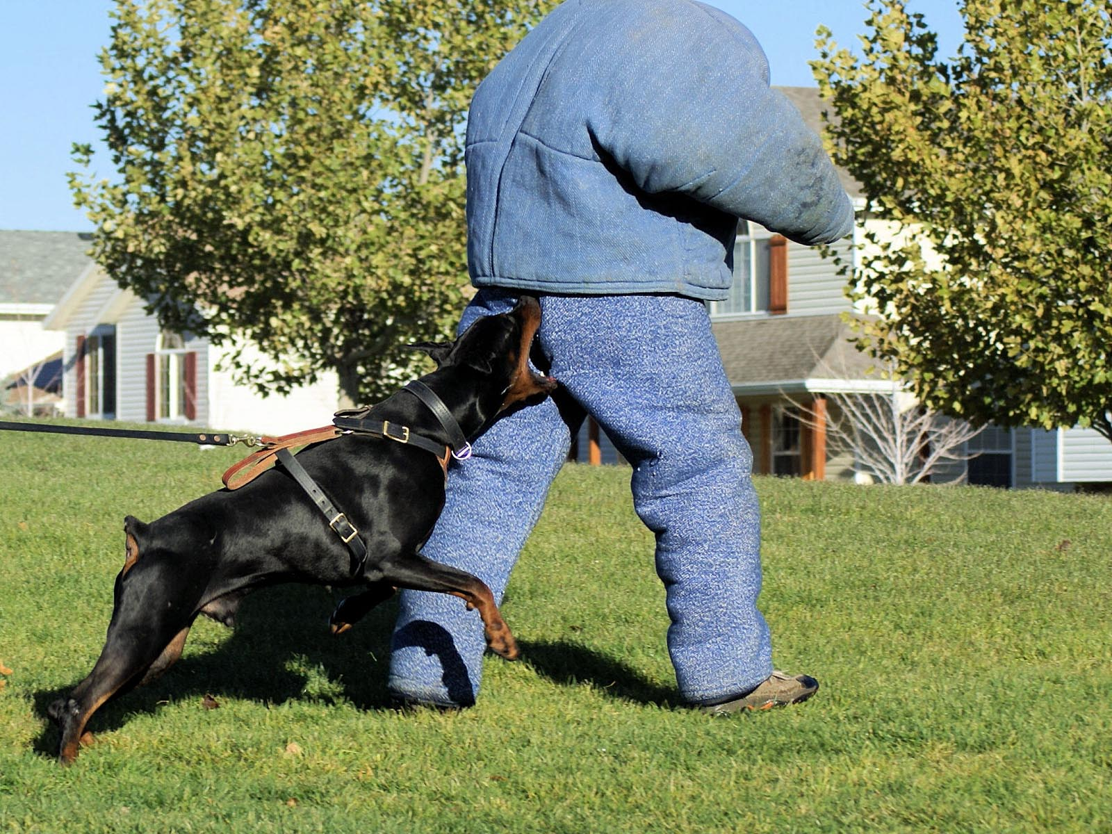 Good Gaurd Dogs That Like Other Dogs
