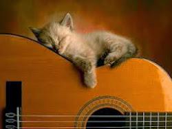 Foto gatinho violão!!!