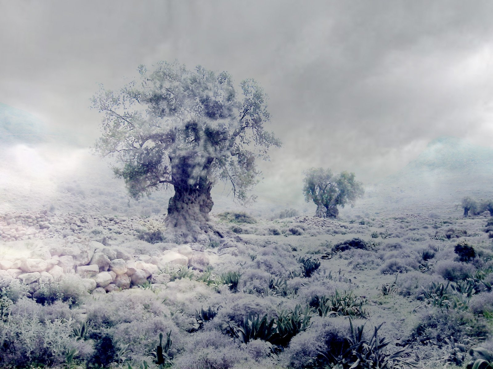 winter nature best wallpapers ever - photo #42