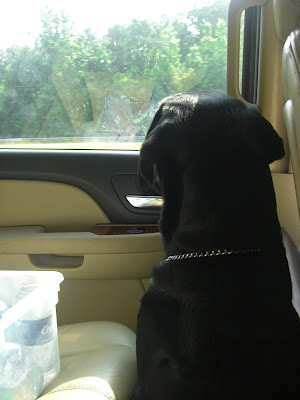 Picture of Rudy staring out the window in the car