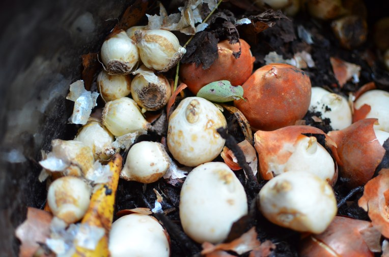 How to Plant a Pot with Bulbs, Cuttings and Seeds by Amy Renea of A nest for All Seasons for Longfield Gardens and Burpee Seeds