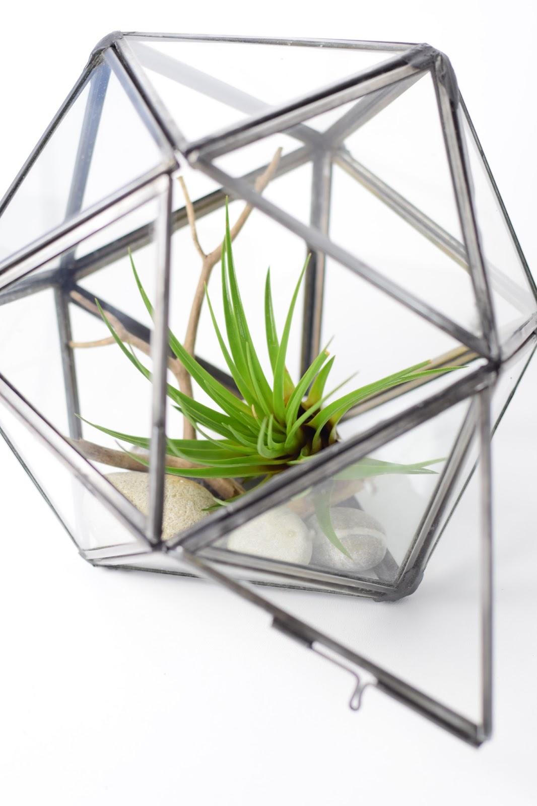 Zimtzebra geometrisches terrarium bepflanzung und for Geometrische deko