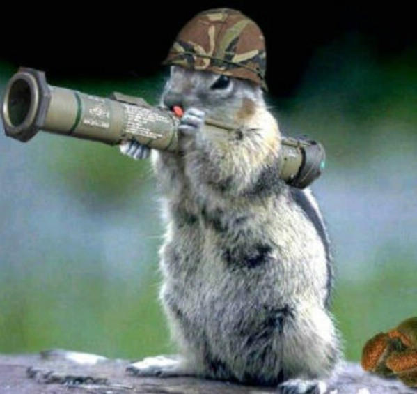 Funny squirrel pictures - photo#1