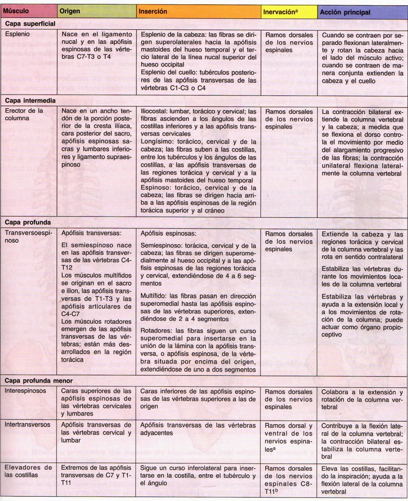 Morfofisiologia I: DORSO