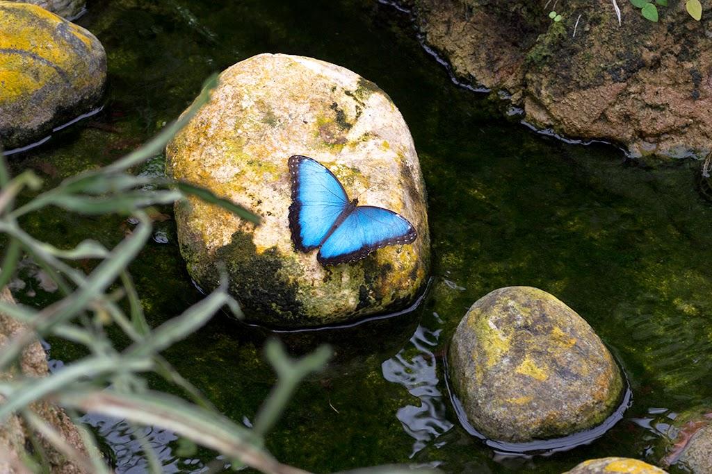 mariposas tropicales