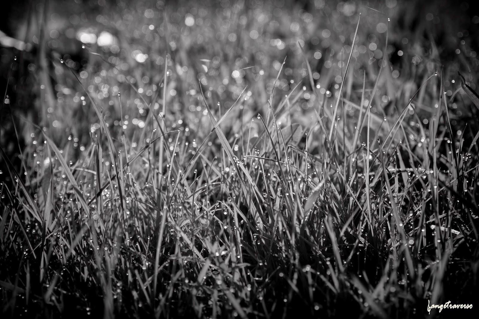 rosée du matin déposée sur l'herbe. Nature in Haute-Savoie, France