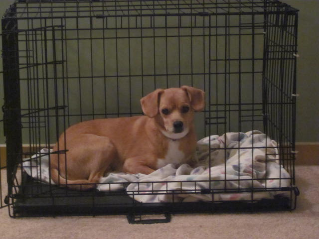 crate training for dogs   Great - thedogs.nhlfan.net
