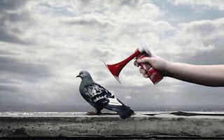 Le saviez-vous?Lundi de crise Crise-cardiaque-pigeon-humour-bruit
