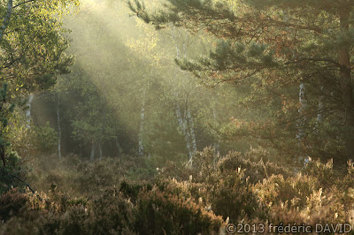 brume lumière forêt Fontainebleau Seine-et-Marne