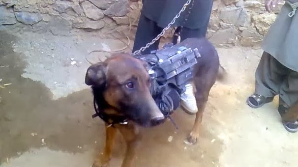 Military dog captured by Taliban fighters, who post video of their captive  December 2013