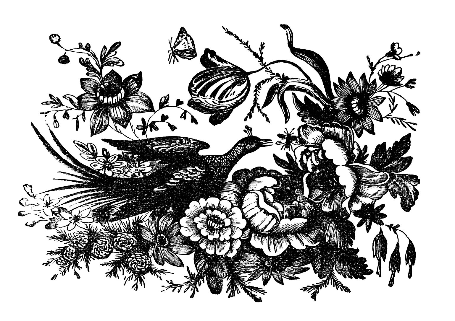 Line Art Flower Design : Digital stamp design free flower vintage bird and