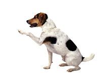 pies szkolenie tresura