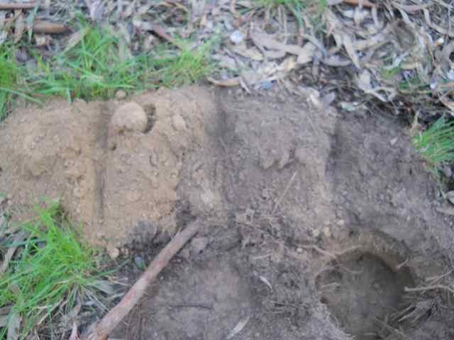 Land for veggies dirty data for The soil 02joy