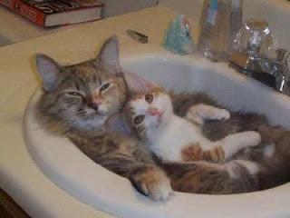 Gata com gatinho no lavatorio