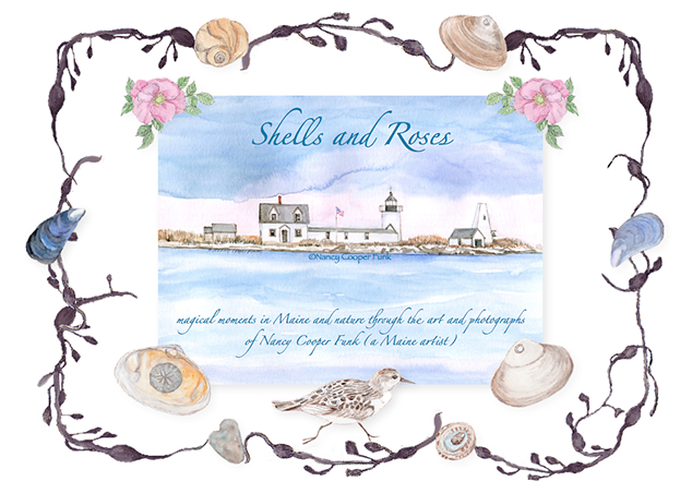 Shells and Roses