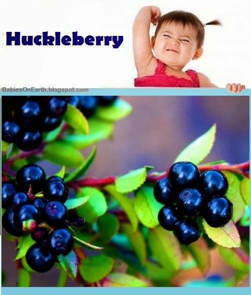 Baby Huckleberry