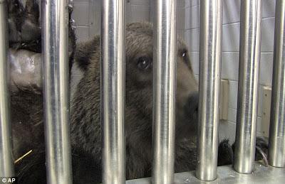 The ones that got away: Sad survivors of exotic animal ...