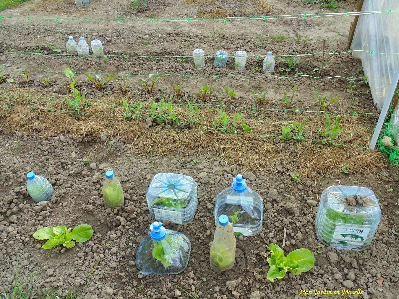 Mon jardin en moselle news du potager for Jardin que planter
