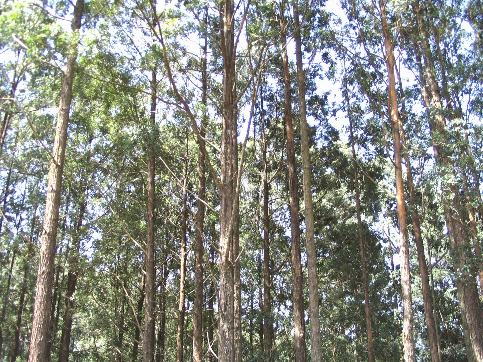 Research Studies On Forest Management In Sri Lanka Green Wood