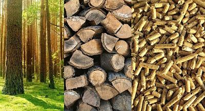 Clasificación de la Biomasa