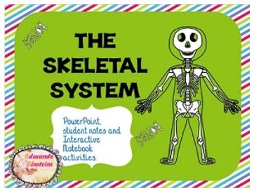 """The Best of Teacher Entrepreneurs: FREE SCIENCE LESSON - """"Skeletal ..."""
