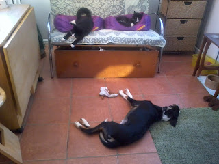 Dog and cats in harmony