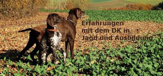 Erfahrungen mit dem Deutsch Kurzhaar in Jagd und Ausbildung