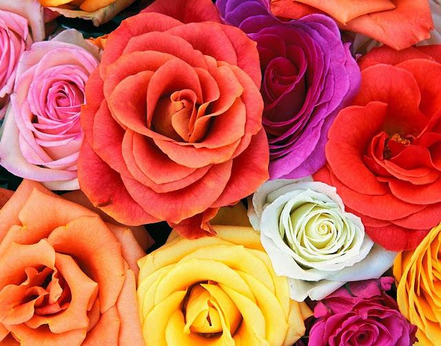 Hình ảnh hoa đẹp 10