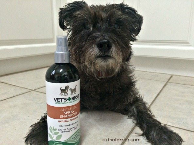 Oz the Terrier with Vet's Best Anti-Flea Shampoo from the New Puppy Holiday Bundle