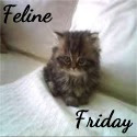 Feline Friday