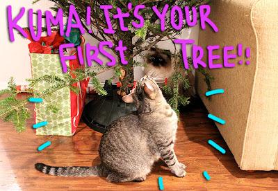 cat-christmas-tree-01