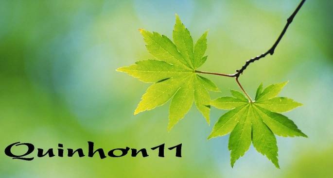 Quinhon11
