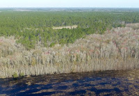 European demand for wood to burn in power plants is increasing exports from forests in the southeastern United States like these near Jacksonville, Fla. (Credit: Andrew C. Revkin) Click to Enlarge.