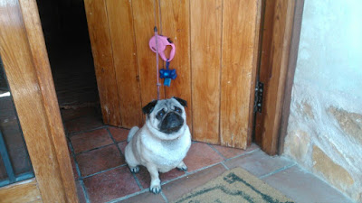 Hotel con mascotas Cuenca