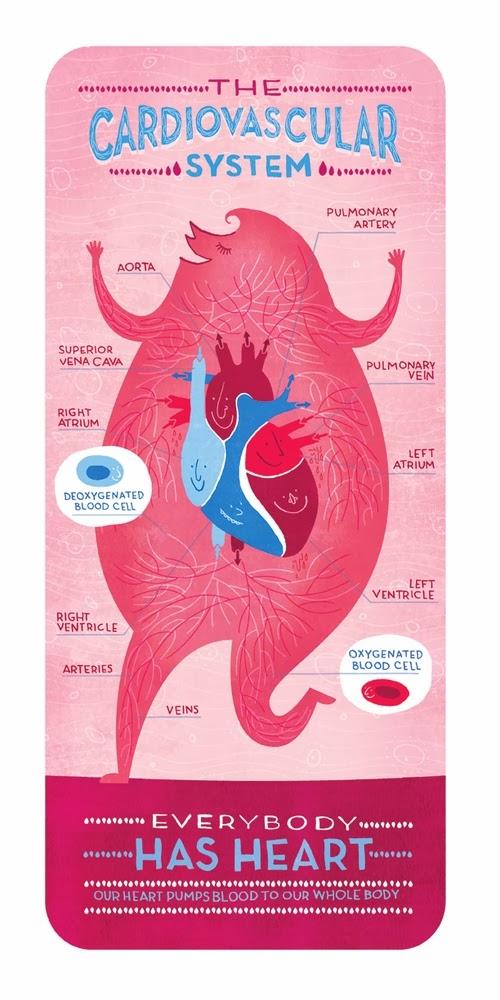 01-Cardiovascular-System-Body-System-Graphic-Designer-Illustrator-Rachel-Ignotofsky