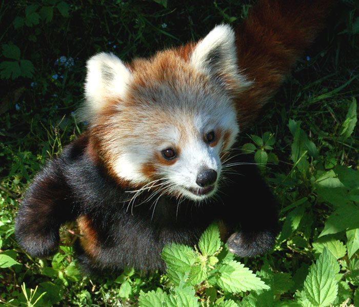 Cute baby animal pictures - photo#1