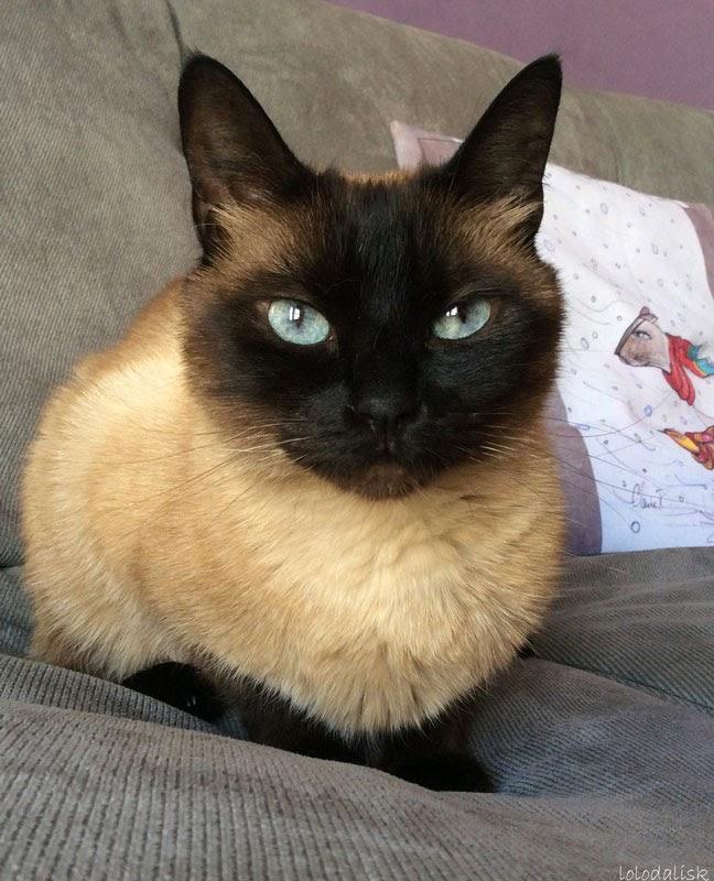 histoire de chats chats des rues heureux. Black Bedroom Furniture Sets. Home Design Ideas
