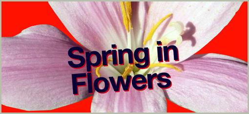 SPRING IN FLOWERS