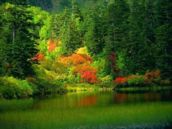 Beautiful Forest Lakes Pictures in HD