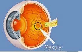 Pengobatan Untuk Degenerasi Makula Pada Lansia