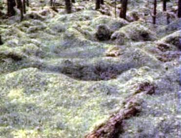 Ciri dan Macam Tumbuhan Lumut
